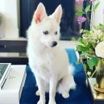 Ivanka's Racist Dog